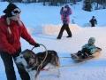 Alaskan malamuutin koiravaljakko